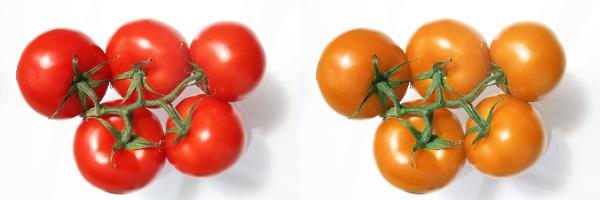 orangea tomater av grå starr