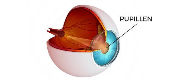 Droppar öppnar upp pupillen