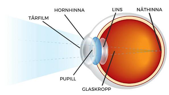 Delar som undersöks av ögonläkaren
